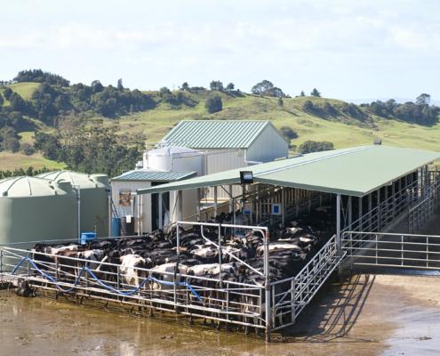 poľnohospodárska hala kravín