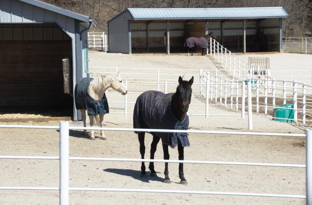 pristresky pre kone